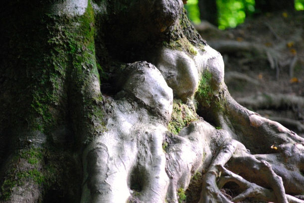 Drei Mumien im Baum oder so ähnlich